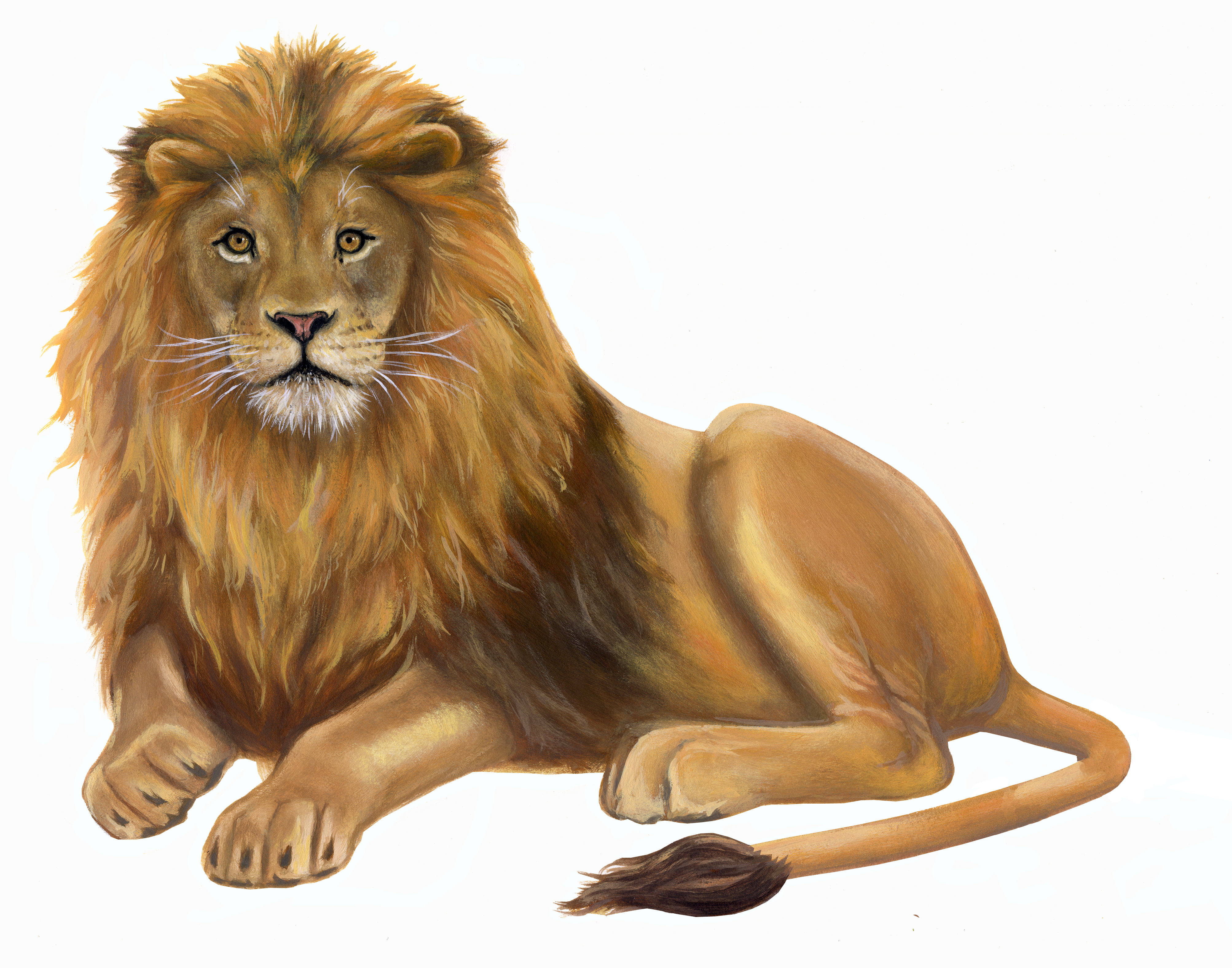 Lion Wall Decal Wall Sticker Room Sets Inspiremurals Com