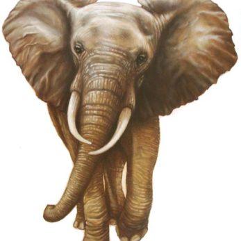 ELEPHANT WALL DECAL WALL STICKER