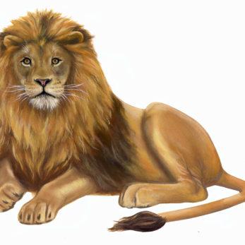 Lion-Wall-Decal-Wall-Sticker