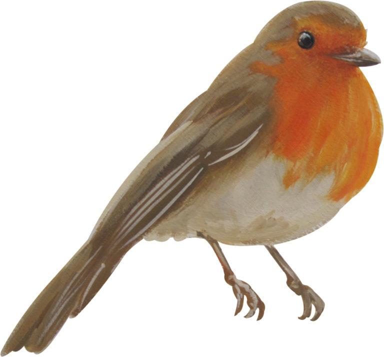 robin-wall-decal
