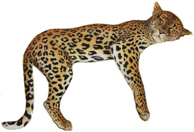 leopard wall sticker